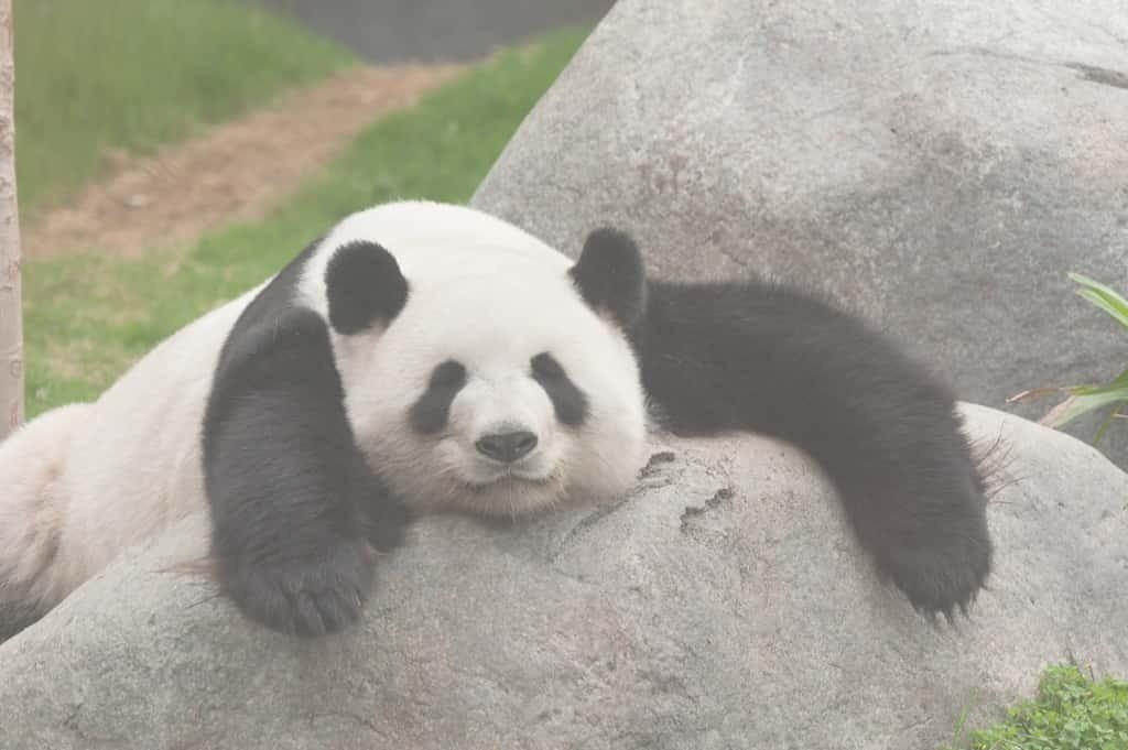 アドベンチャーワールドの人気お土産10選 パンダ好きが狂喜乱舞する品